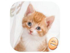 어린이를위한 직소 원더 새끼 고양이 퍼즐 아이폰앱 아이콘