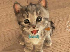 아이폰앱 작은 고양이 대표이미지