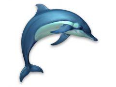 Dolphins 3D 맥앱 아이콘
